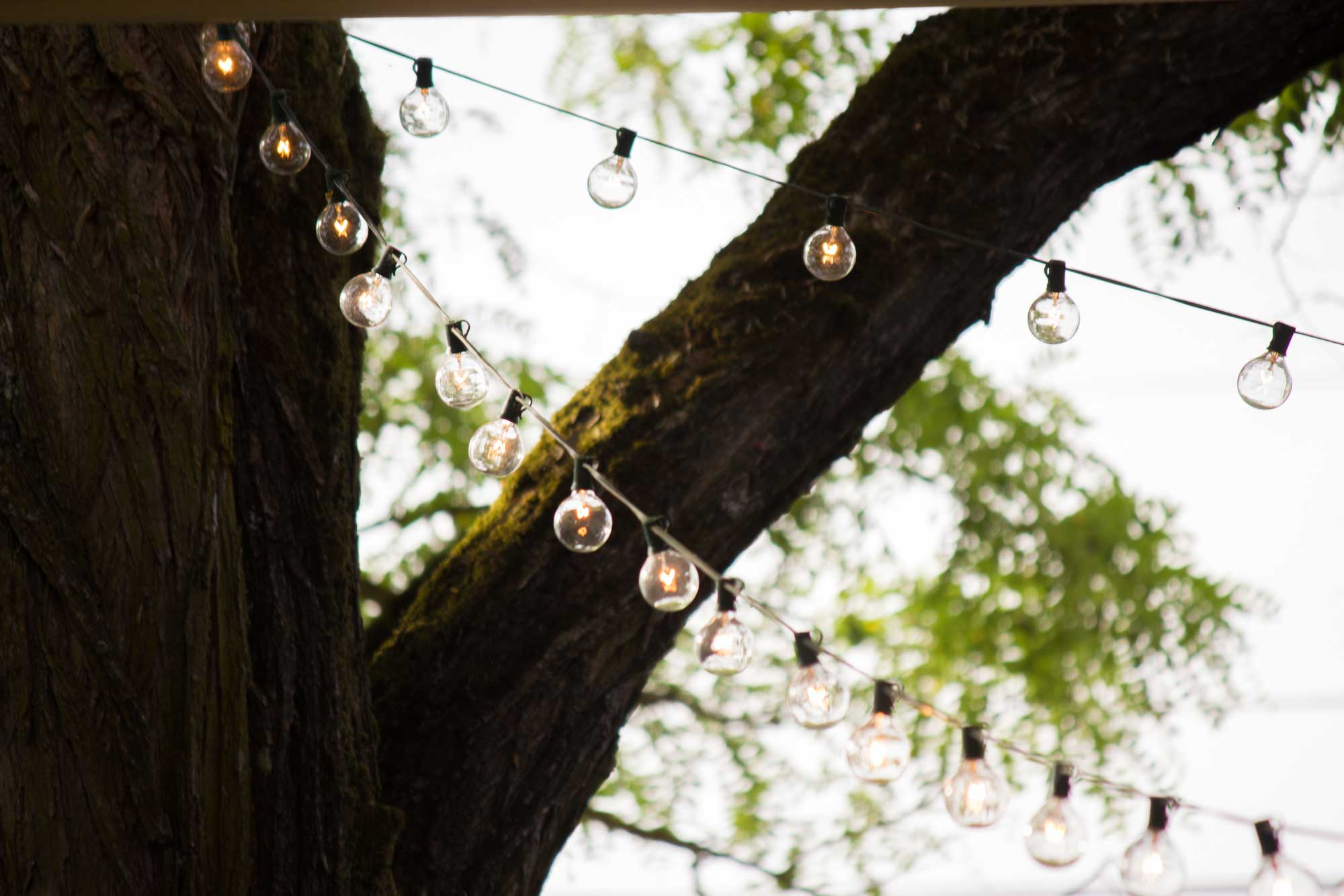 Picture of bulb lights hanging on tree branches outdoors during summer